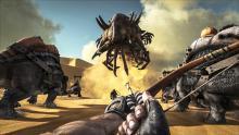 Witness a rare battle in the desert