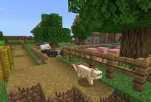 a cat in a village