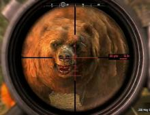 Wild Bears will be encountered everywhere! Think you have what it takes