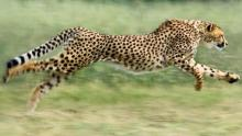 Make your character run like a cheetah.