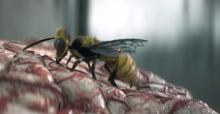 Wasp eating human brain