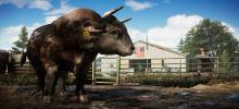 A farmer stands leaning against his farm pens looking proudly at a large bull in front of him.
