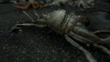 Death Stranding, crabs, king crabs