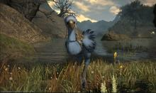 One of the keys to unlocking the legendary Gold Chocobo