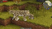 Encounter animals like this and more with Zoo and Wild Animals Rebuilt!