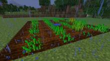 Don't forget, you not longer need water to touch each block to grow successful crops!
