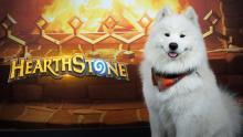 Just a Hearthstone dog
