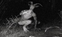Some claim to have caught the winged demon on trail cams at night.