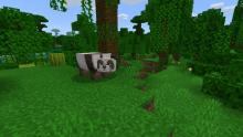 Jungle biomes are home to pandas. How cute!