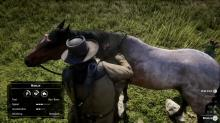 Tame and brush wild horses to make a bond with them