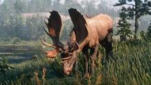 A small redbird takes a ride on a large moose.