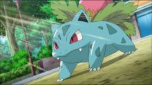 Ivysaur makes a few appearances throughout the Pokemon series