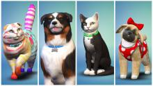 Customize your pet to look just like your real life companion...or not.