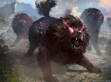 These dogs can grow strong on their own, but they do even more damage as a pack.