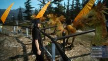 Noctis shopping for a Chocobo to ride through the water
