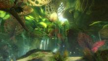 Caledon Forrest is the area that the Sylvari awaken.
