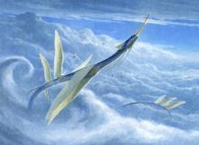 The sky serpent companion of Ikoria